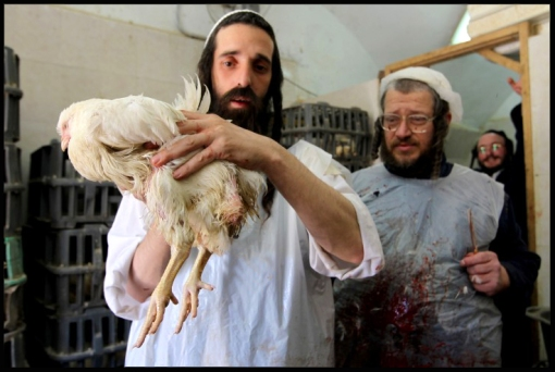 A scene from kosher slaughterhouse in Mea Shearim neighborhood in Jerusalem.  Photo by Nati Shohat/Flash90.